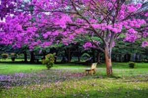 cubbon_park1-1024x682